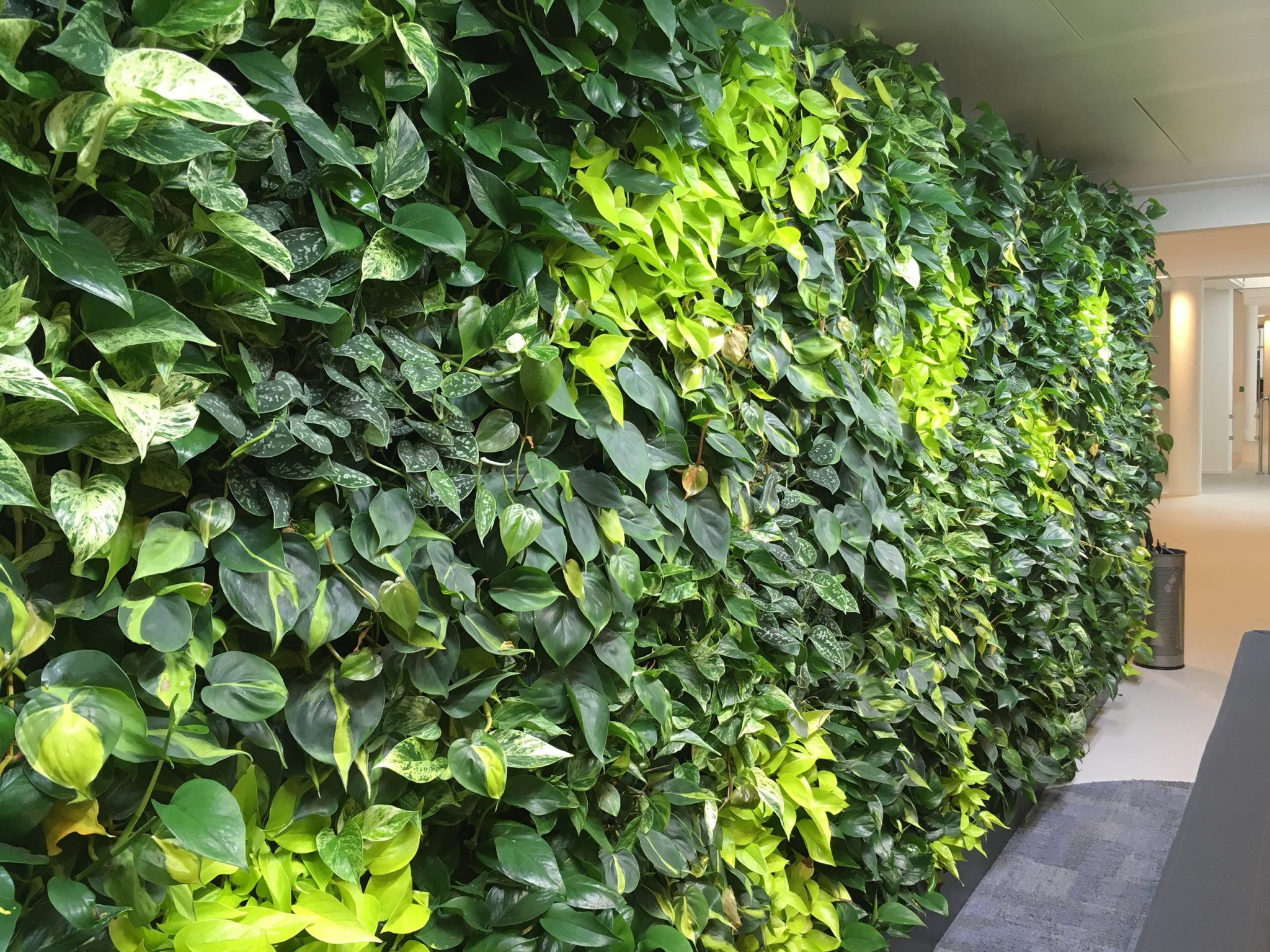 Beau Donu0027t Wait To See Plants Grow But Experience The Real NextGen Living Walls  Impressive Design From Day 1!