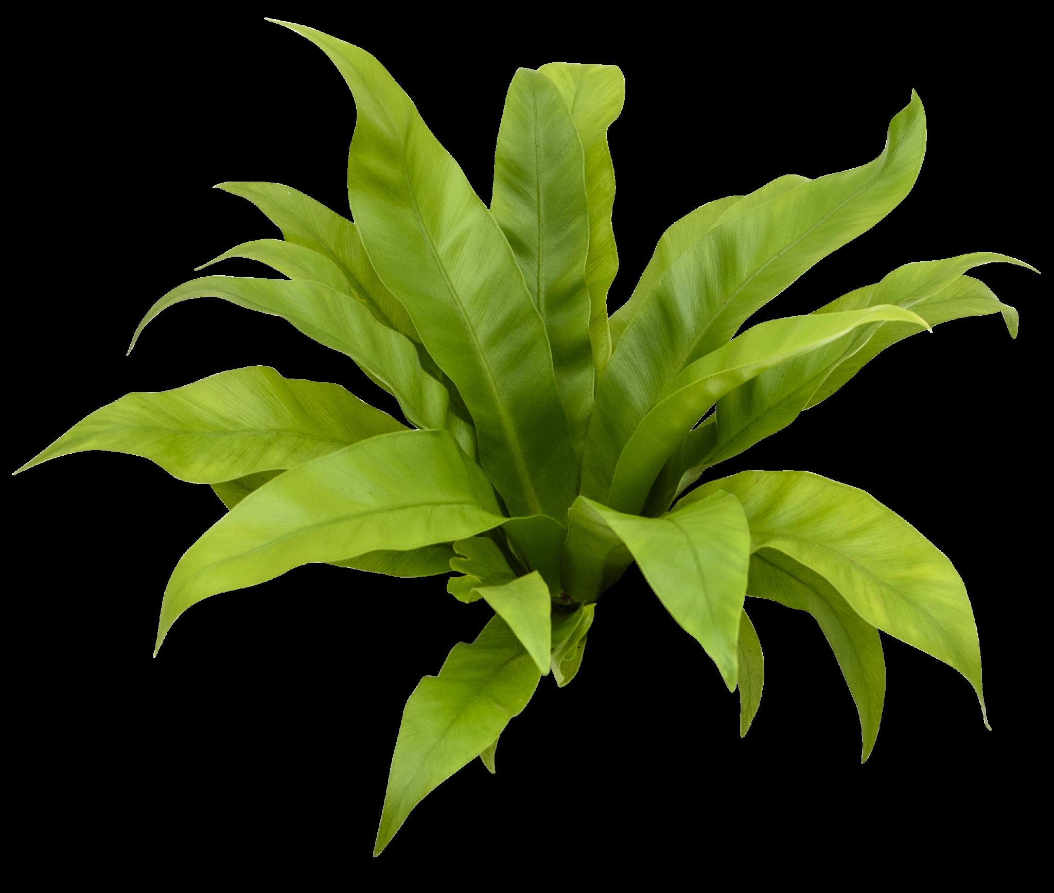 Pflanzen Nextgen Living Walls